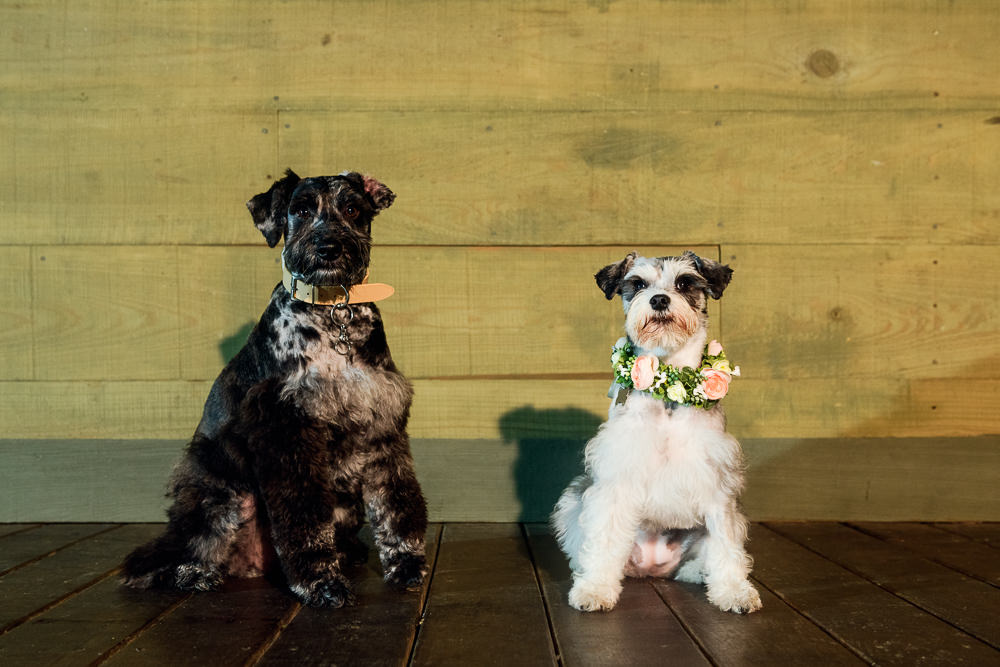 Two puppies, Fun Engagement Session at Eden Garden and Fort Pickens, Lazzat Photography, engagement photos